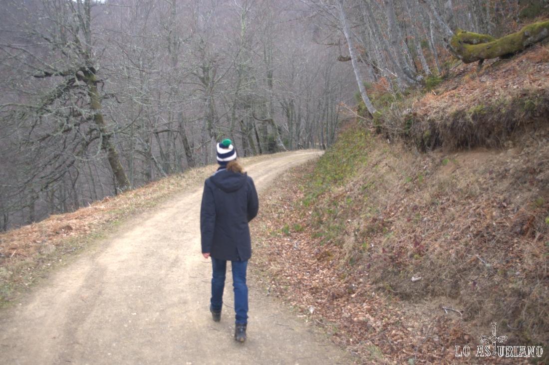 De nuevo entre los grises troncos de las hayas de Montegrande.