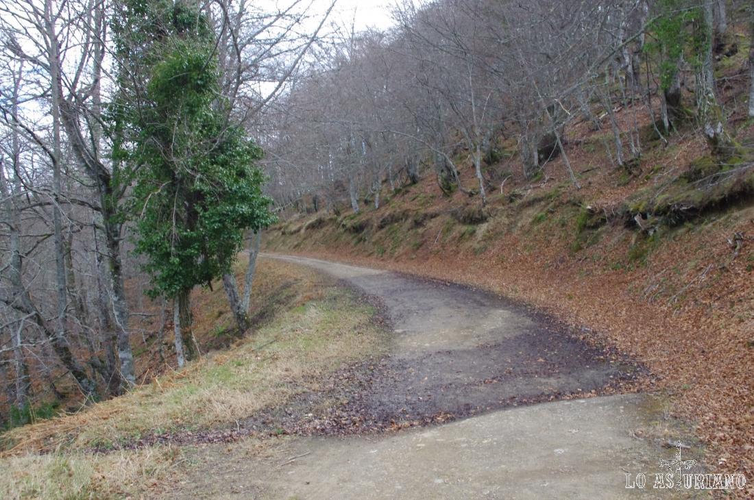 Hayedo de Montegrande