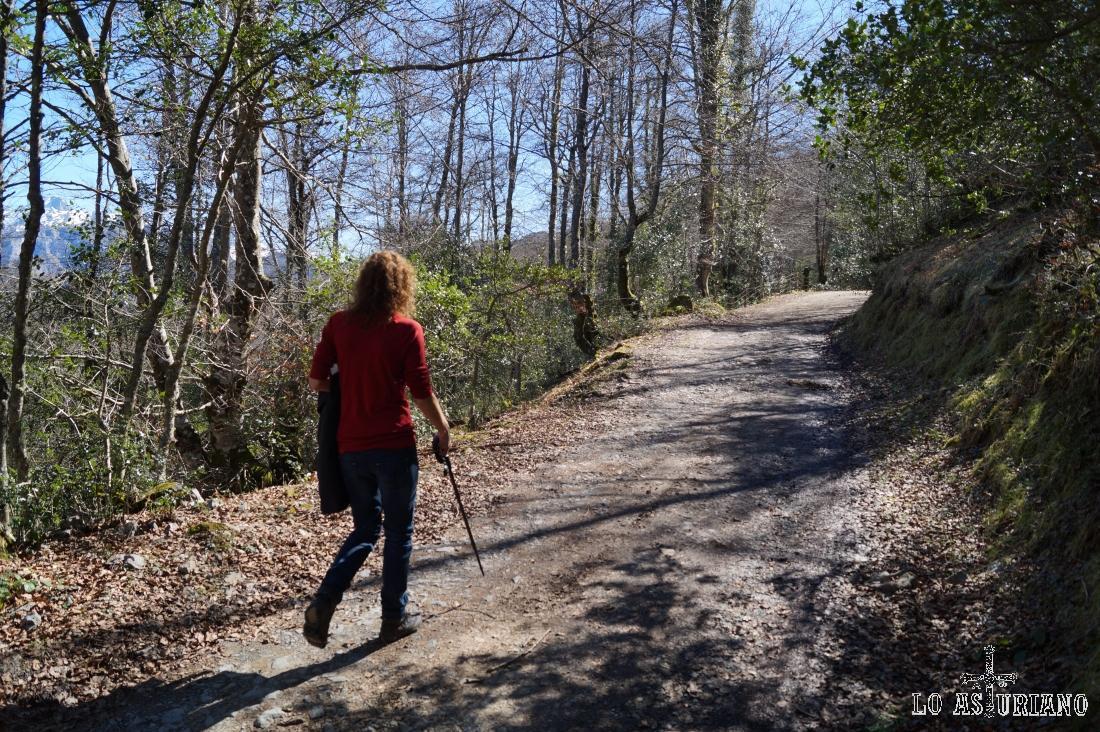 Comenzamos a adentrarnos en el bosque de Peloño, por la pista que seguiremos de momento.