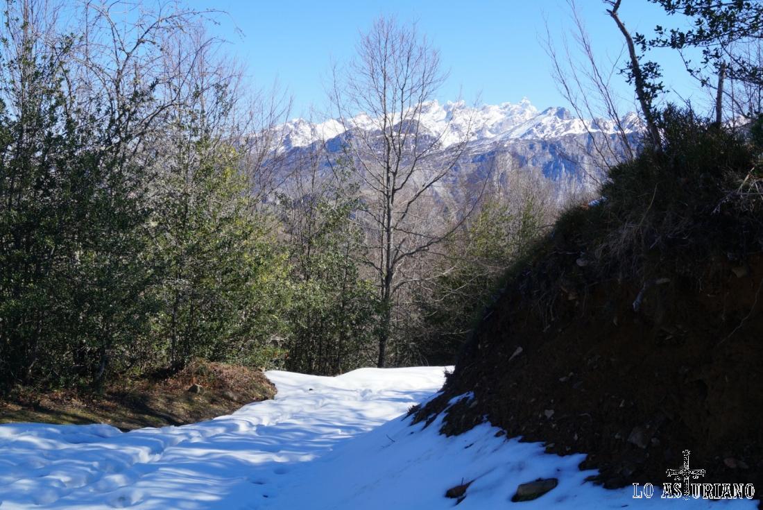 Los Picos de Europa desde la pista de subida a la collada de Caldes y el camino al Zorru.