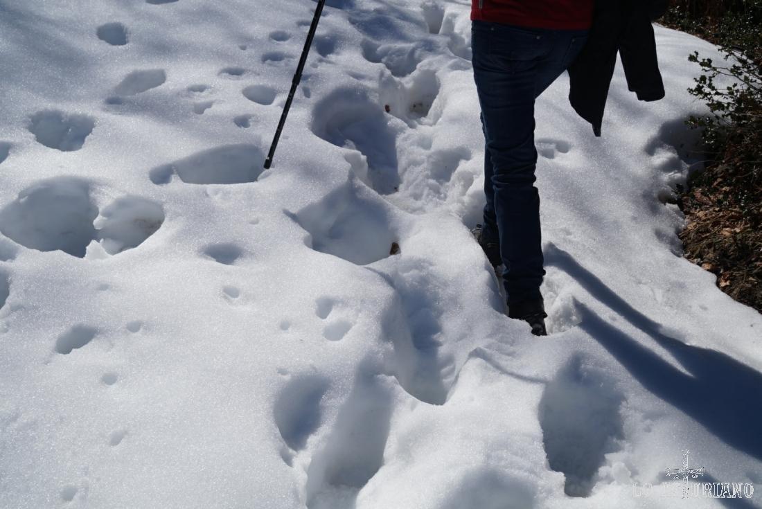 Esta es la espesura de la nieve acumulada en el camín.
