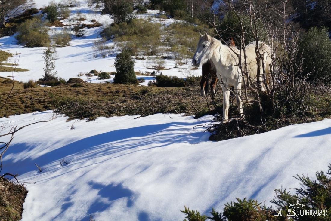 Los caballos, disfrutando de un día de sol, enmedio del lluvioso y nevoso invierno.