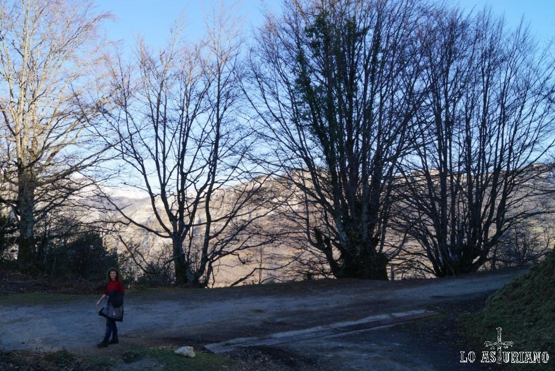 Volvemos a encontrar la pista del bosque de Peloño y tomamos la dirección izquierda, hacia Les Bedules.