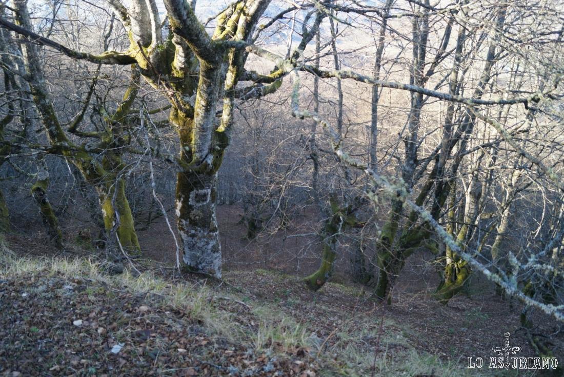 El Bosque de Peloño es uno de los mayores hayedos de la Península Ibérica, con la categoría de Reserva Natural Parcial.
