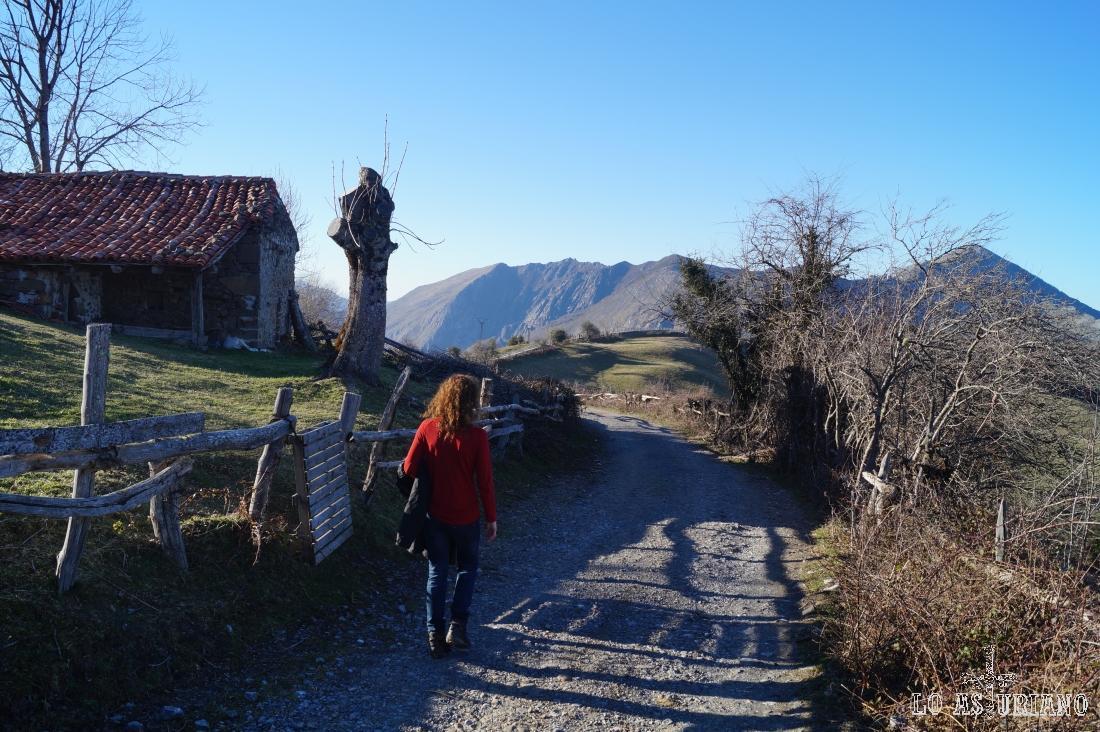 La pista de Peloño, a la salida del bosque, llegando a Les Bedules.