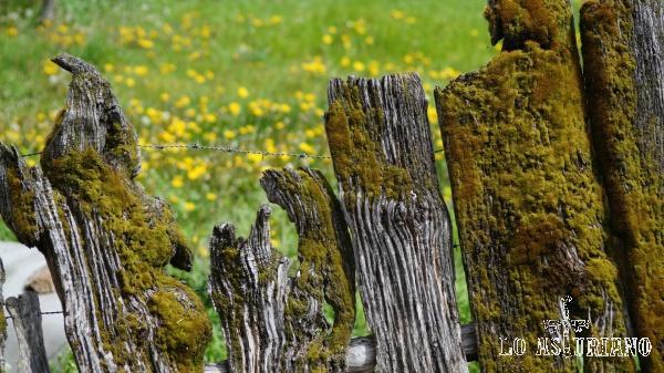 Primavera en Entragu, Teverga, Asturias.