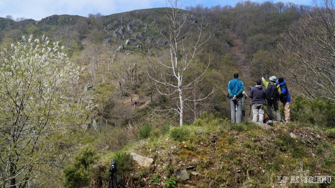 Es habitual ver a amantes de la naturaleza, buscando osos en la sierra de Tablado, cerca de Fondos de Vega, Degaña.