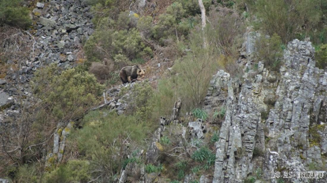 En las zonas pedregosas de la sierra de Tablado es posible ver osos pardos.