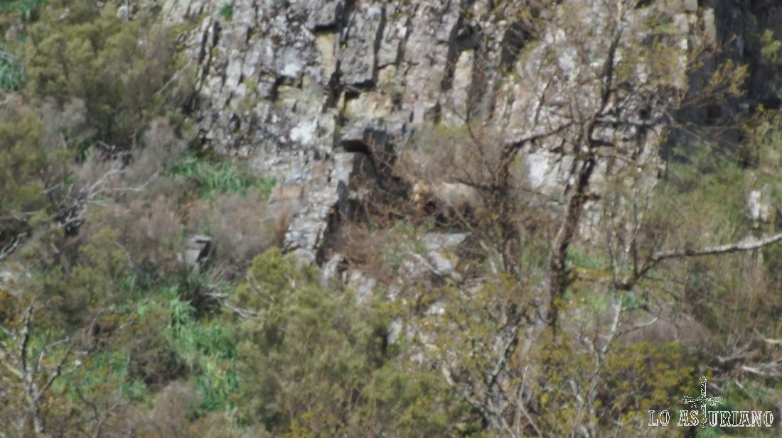 El oso, en una roca, en el centro de la imagen.