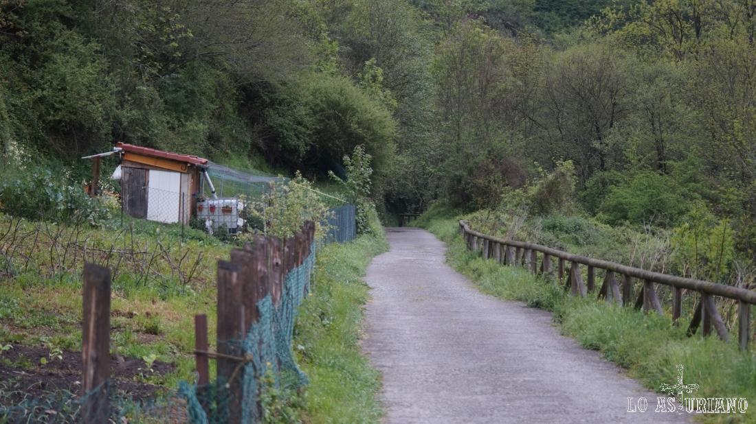 La senda del oso nos llevará los próximos 4 km hasta Las Ventas.