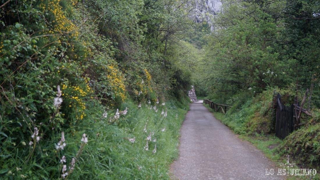 Las flores amarillas y blancas empiezan a abundar en las veras del camino.