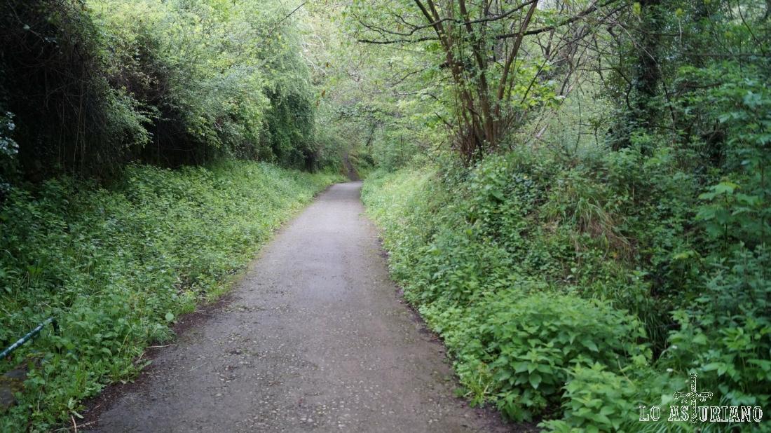 La senda del oso es perfectamente transitable en bici y de hecho un gran porcentaje la realiza de ese modo.