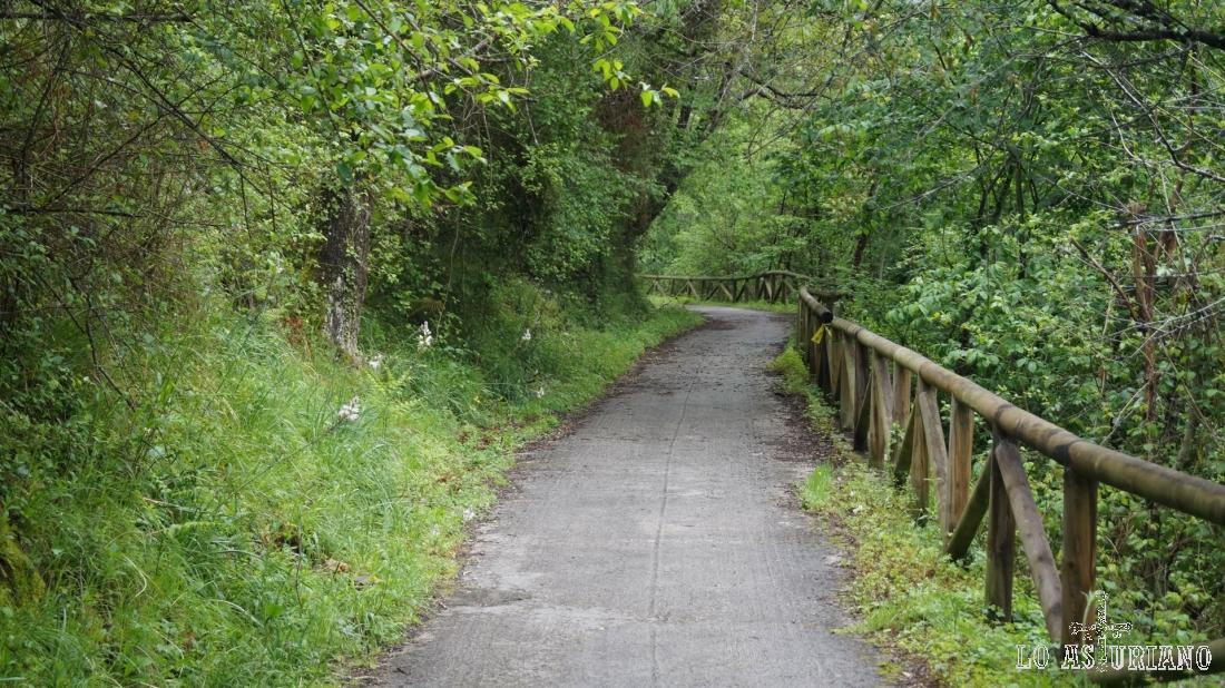 La senda del oso, de verde radiante.