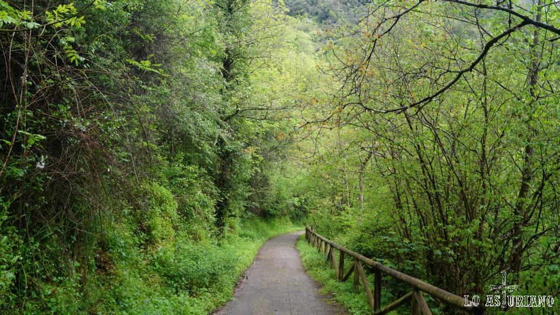 Este tramo de la senda del oso, también los tenemos desarrollado en el tramo: Caranga Baxu-Teverga.