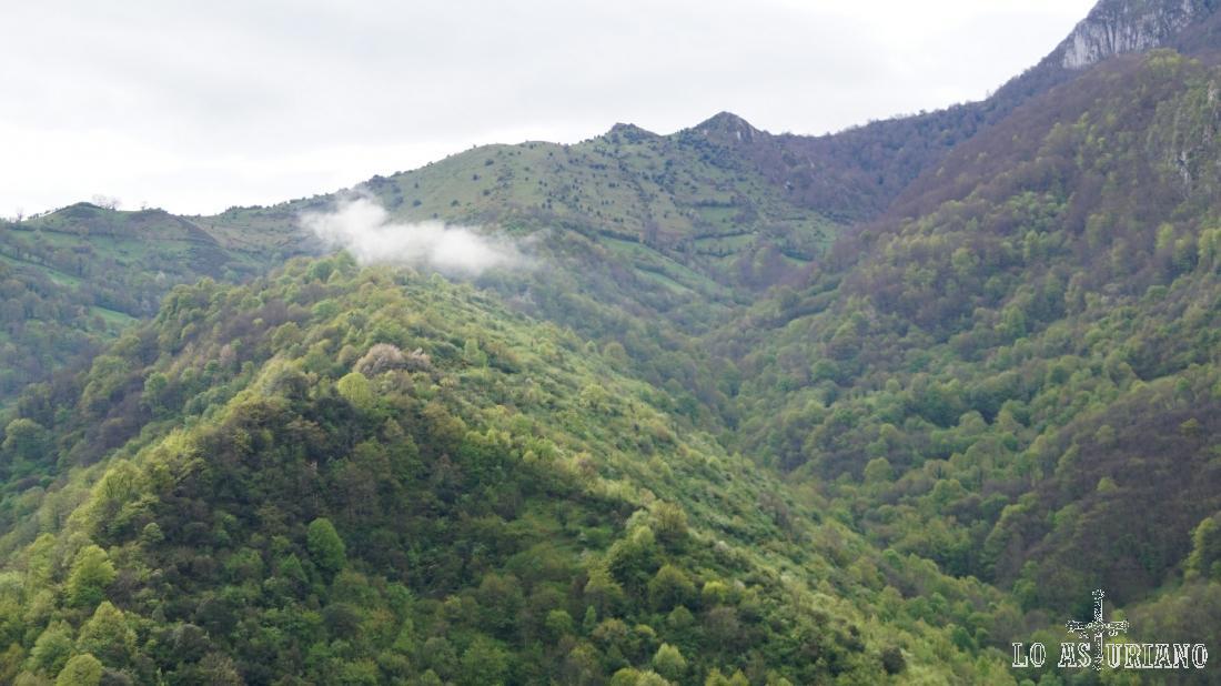 Bosques de El Castiellu y valle de San Esteban.