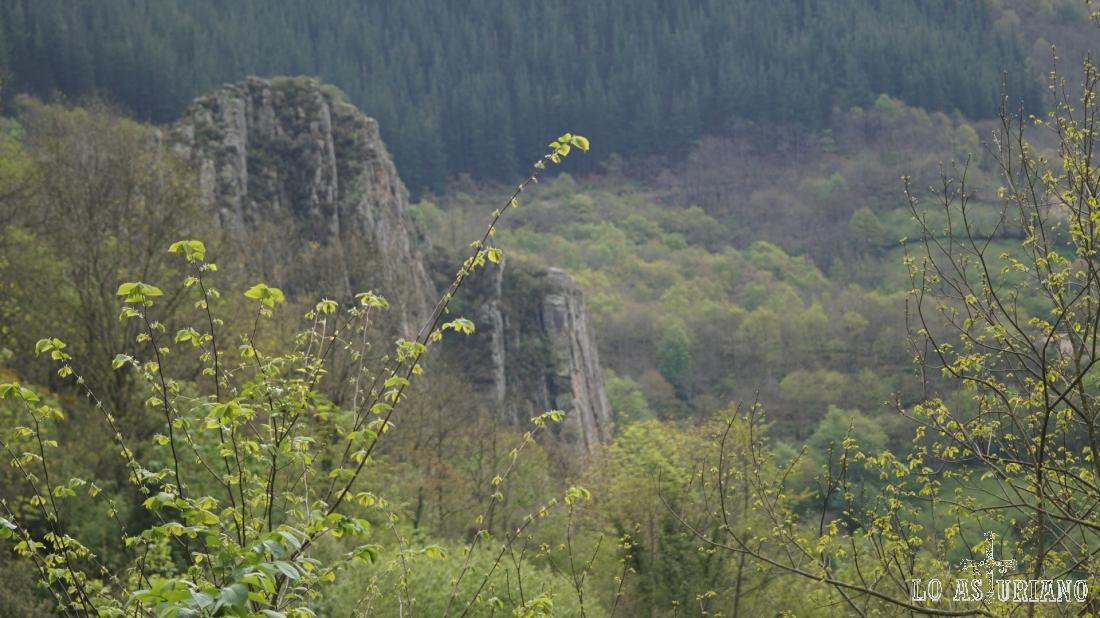 Este entorno es propicio para el oso: rocoso, escarpado, con muchos bosques y comida.