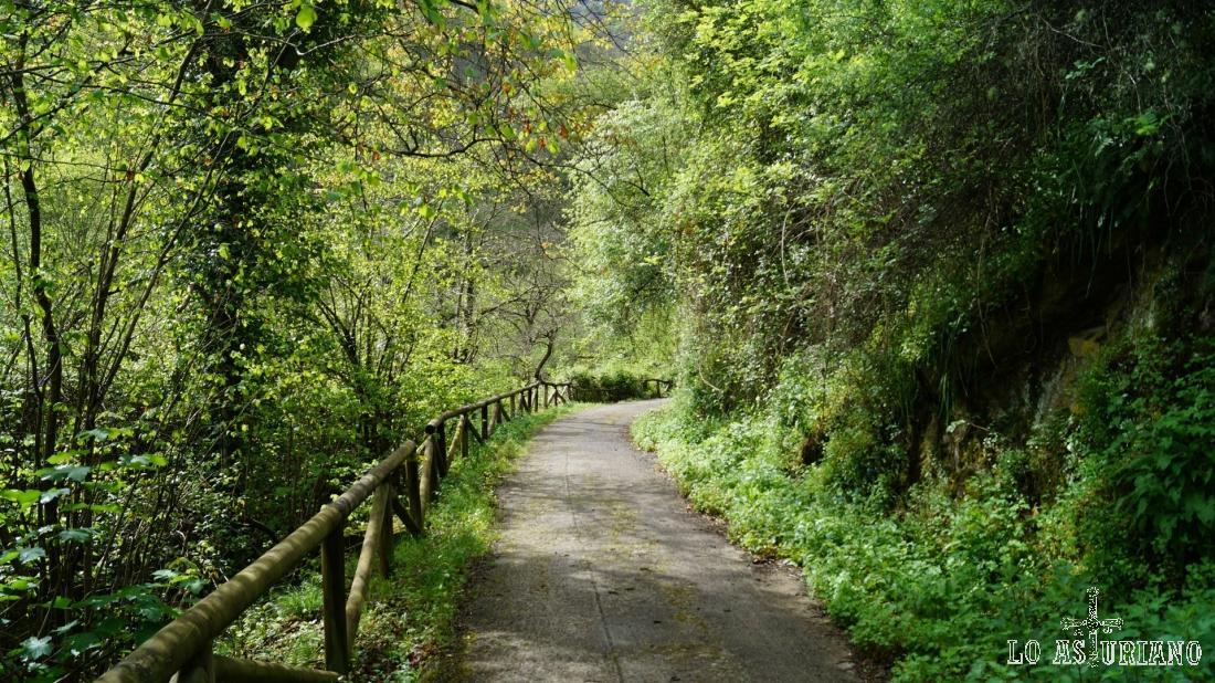 Otra vez en la majestuosa senda del oso, estampa primaveral.