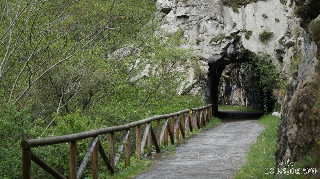 Uno de los muchos encantadores túneles de la senda del oso.