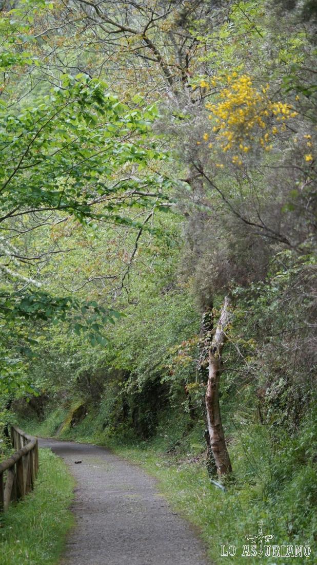 Los amarillos van apareciendo en la paleta de colores primaveral tevergana.