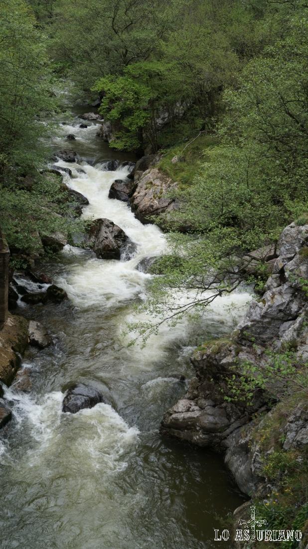 Las aguas limpias y alegres del Teverga.