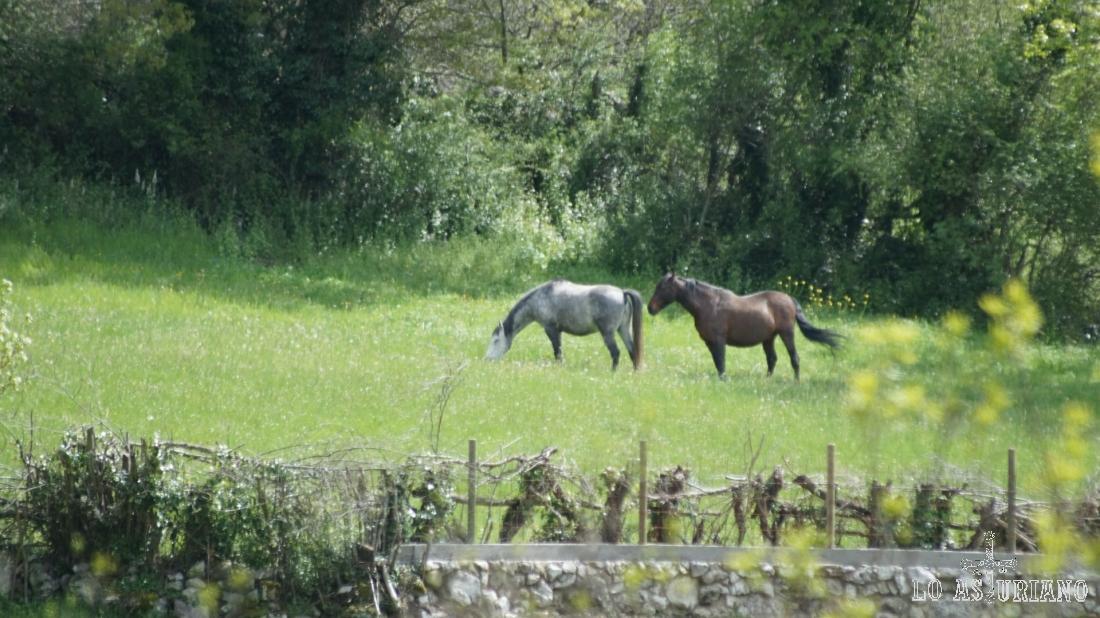 Os pongo estos 2 caballos del otro lado del valle con mi potente zoom. :)