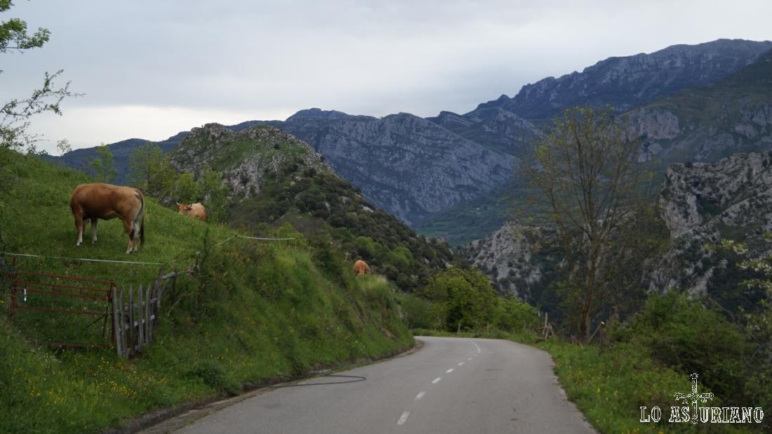 Desde la nacional, tienes apenas 8-9 km de carretera bastante decente hasta Bandujo. Paisajes como este te acompañan durante el trayecto.