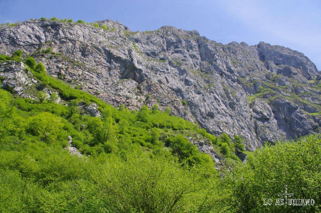 Rocas peladas y maleza primaveral.
