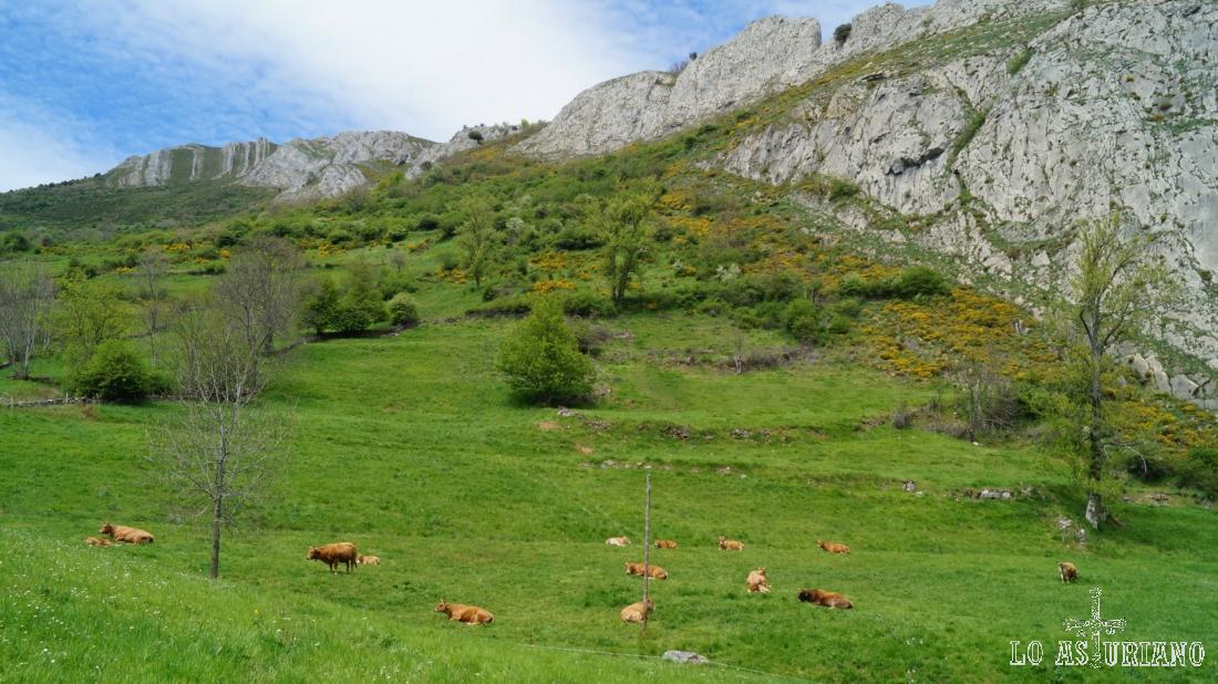 Vacas en los praus, con la peña Blanca al fondo.