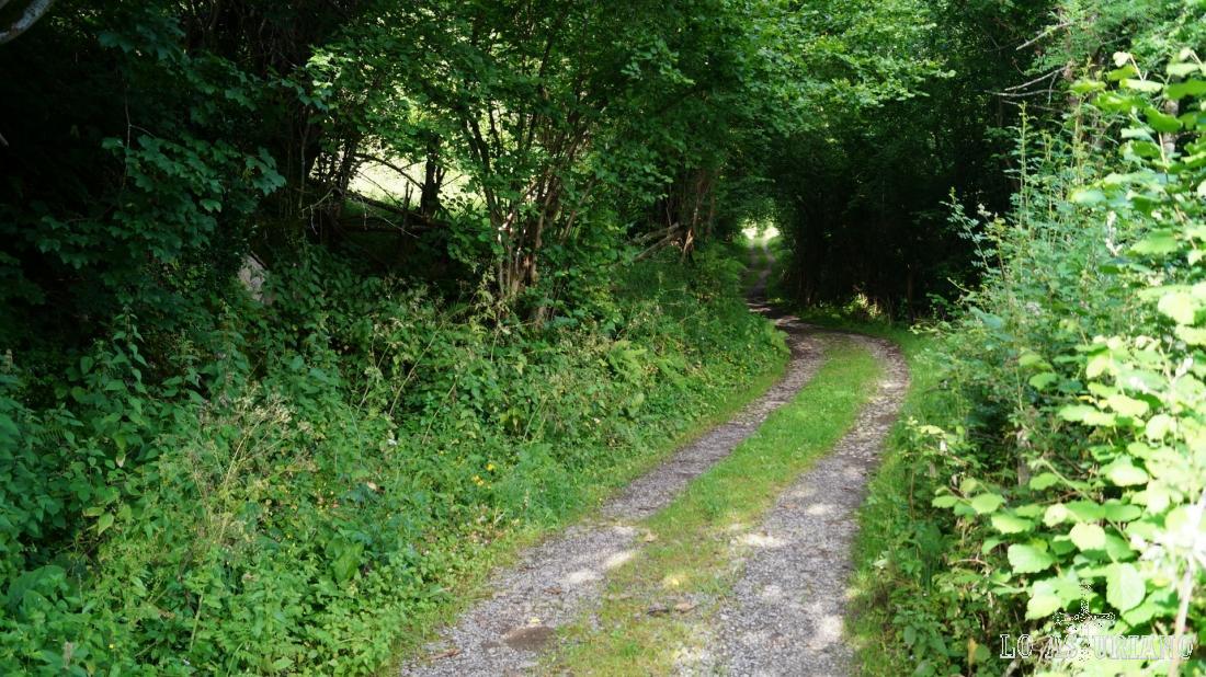 """El camino va metiéndose en un """"agujero verde""""."""