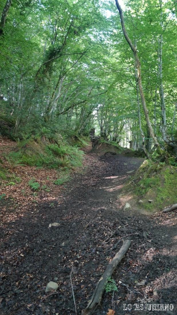 En esta zona del hayedo el camino es más empinado.