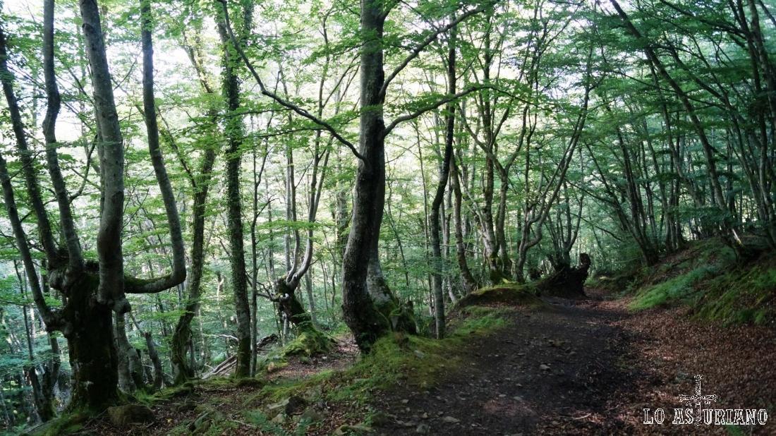 Cualquier ruido en el enmarañado bosque, nos llama la atención.