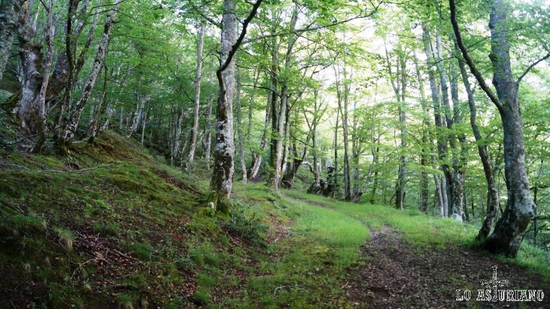 El verde (mate) hayedo en verano, pasa a amarillo y rojo en otoño, verde claro en primavera y pelado en invierno.