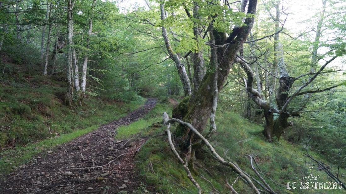 Extraordinario el disfrute natural, que da el pasear por estos bosques tan poco transitados.