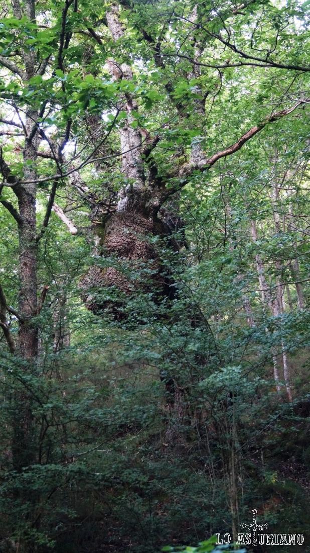 Que bonitas son las selvas asturianas.