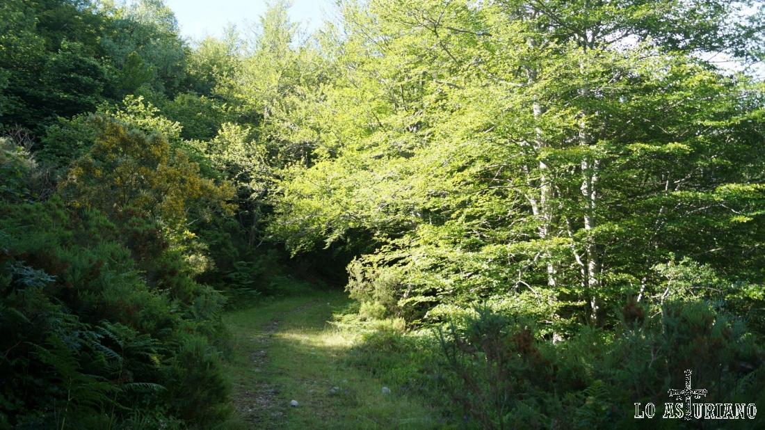Estas zonas despejadas de árboles, están ya cerca de la collada.
