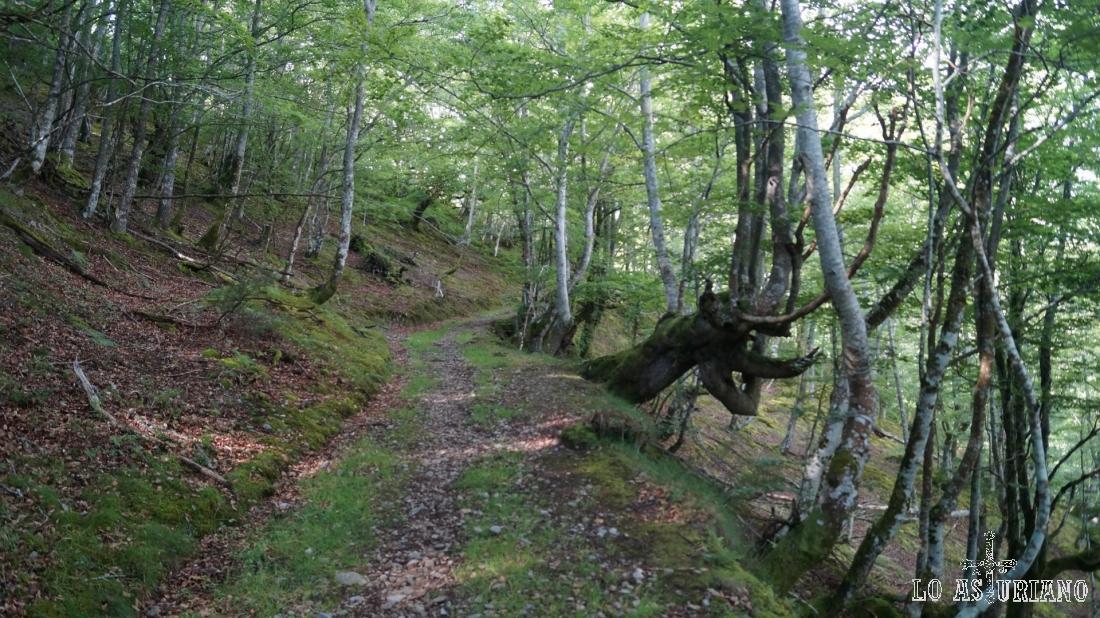 Camino en el hayedo del Pando, cerca de Fresnedo, Teverga.