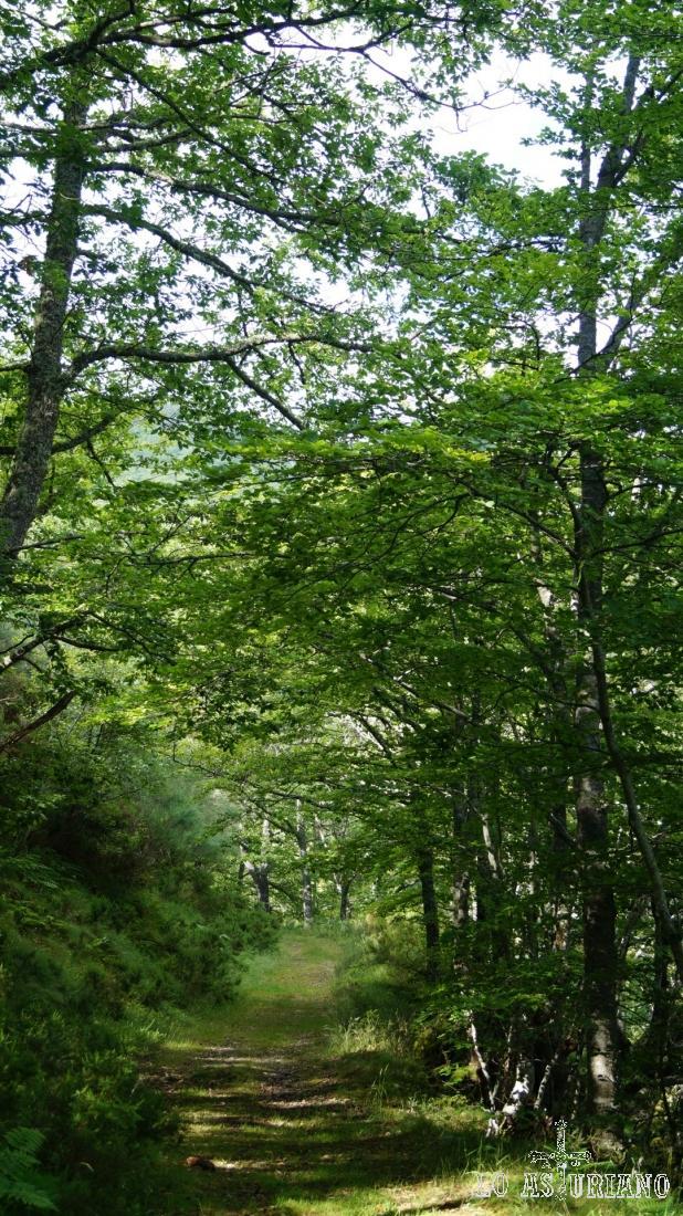 Ultimos tramos de bosque.