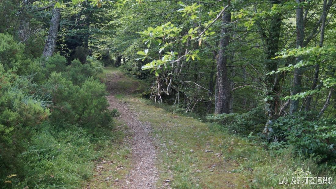 Estamos ya en la parte alta del bosque, cerca de la collada.