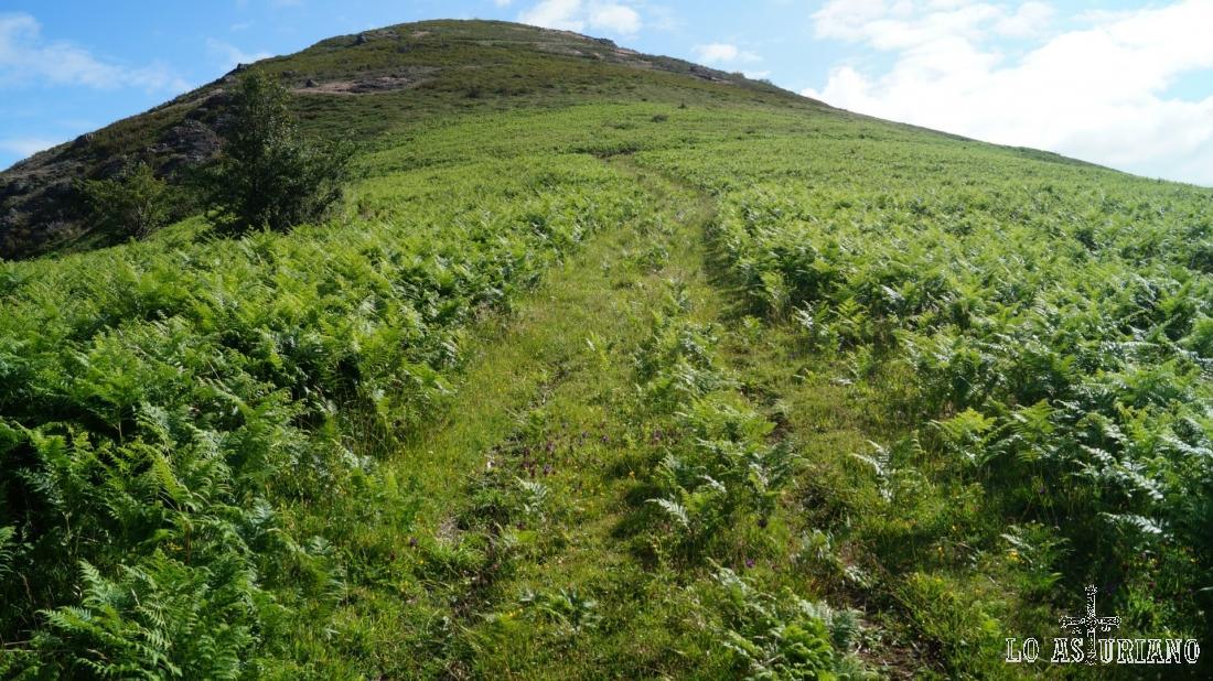 Este es un primer plano del camino entre los helechos.