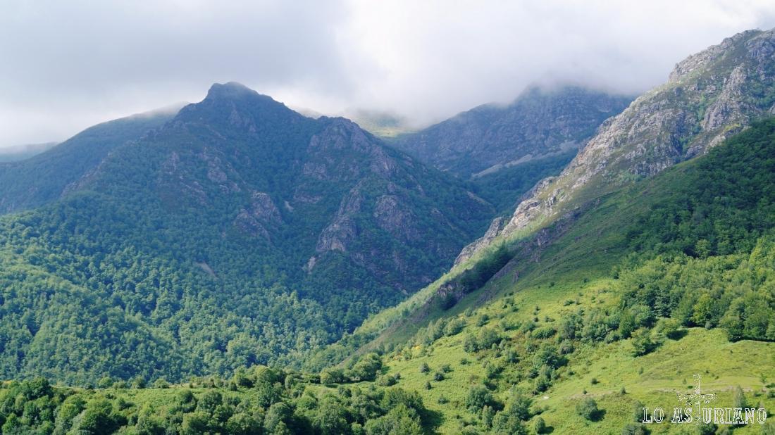 Las entrañas del hayedo de Montegrande, desde la subida a peña Vigueras.