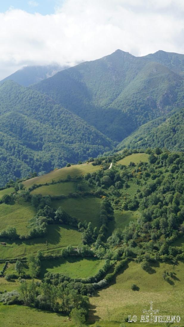 El hayedo de Montegrande, lindando ya casi con la provincia de León.
