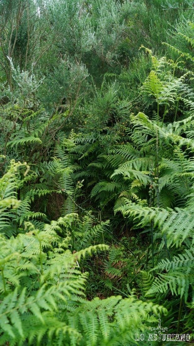Tramo de una espesa maleza, que tenemos que ir apartando con las manos a modo de selva tropical.