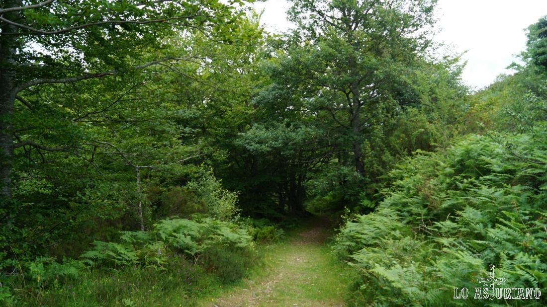 Llegamos a la puerta de entrada al bosque del Pando.
