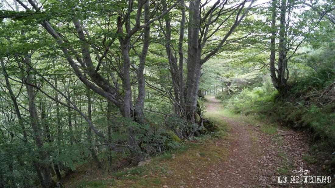El camino nos lleva ahora entre las sombras del bosque.