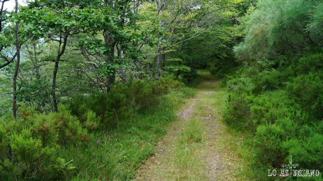 Vamos haciendo camino entre esta maravilla de bosque.