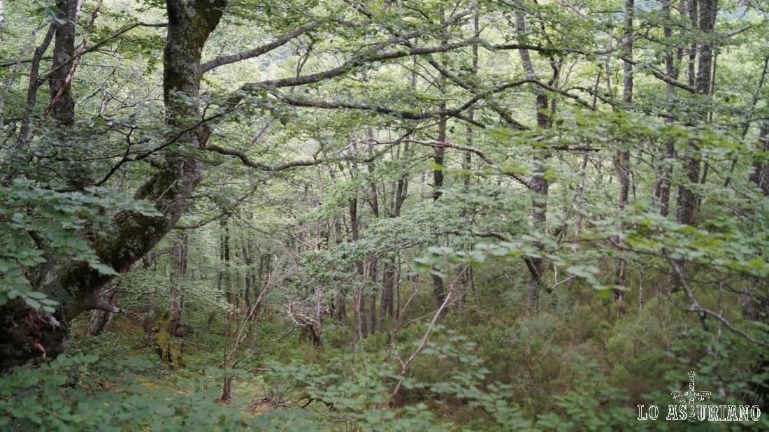 Precioso colorido del bosque.
