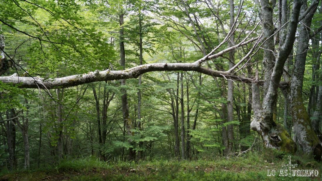 Que bonitos detalles nos da el bosque, como este árbol caido.