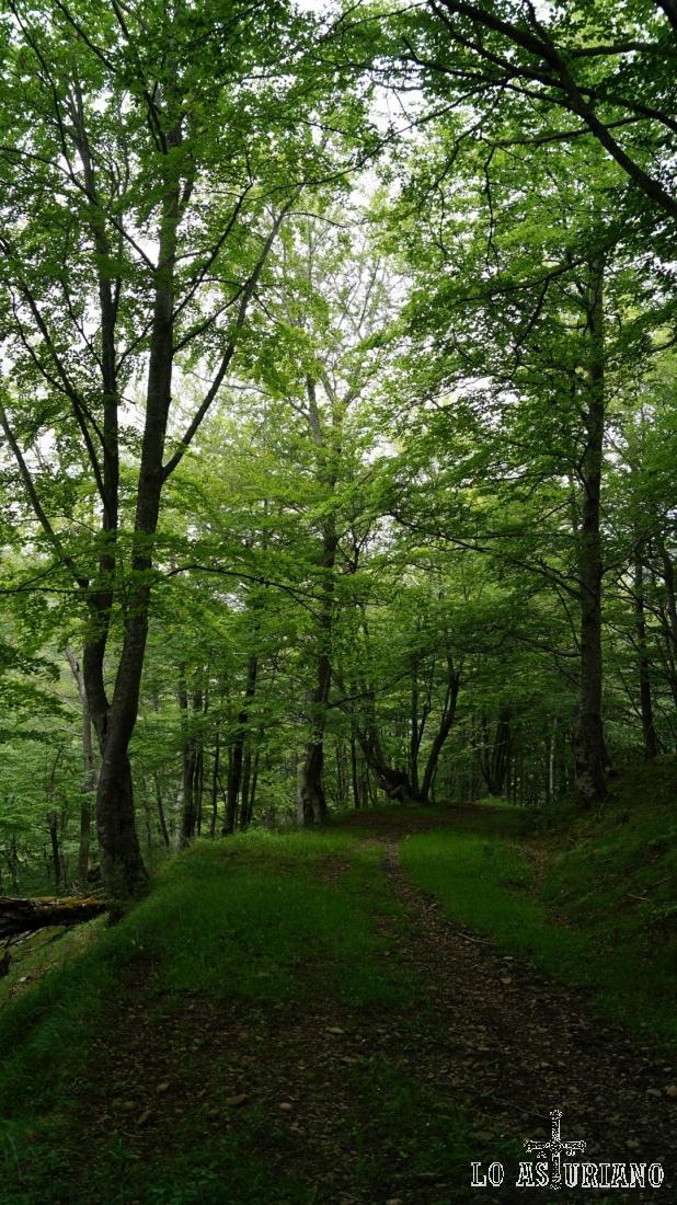 Fíjate la oscuridad que nos da el frondoso bosque.