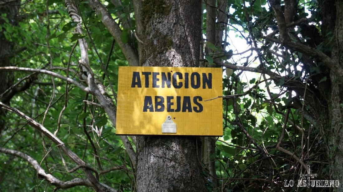 Atención abejas.
