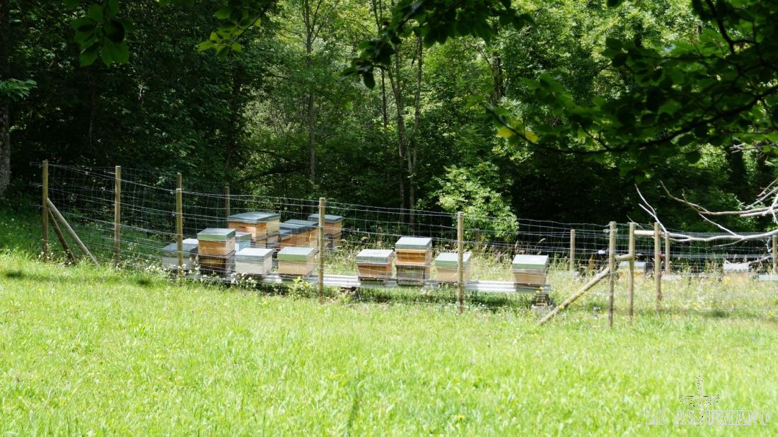Los panales de la riquísima miel que se produce en toda la Cordillera Cantábrica.